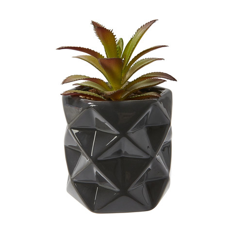 Faceted Succulent - Grey