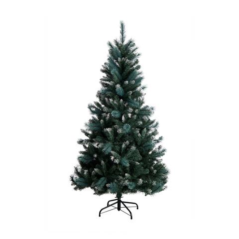 Australian Christmas Tree Pine.1 82 Metres Spruce Winter Pine Christmas Tree