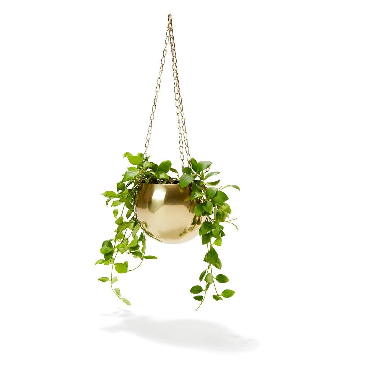 Brass Plated Hanging Planter Kmart