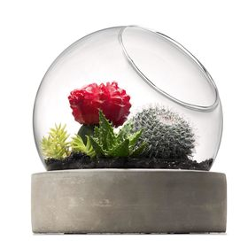 Terrarium with Base